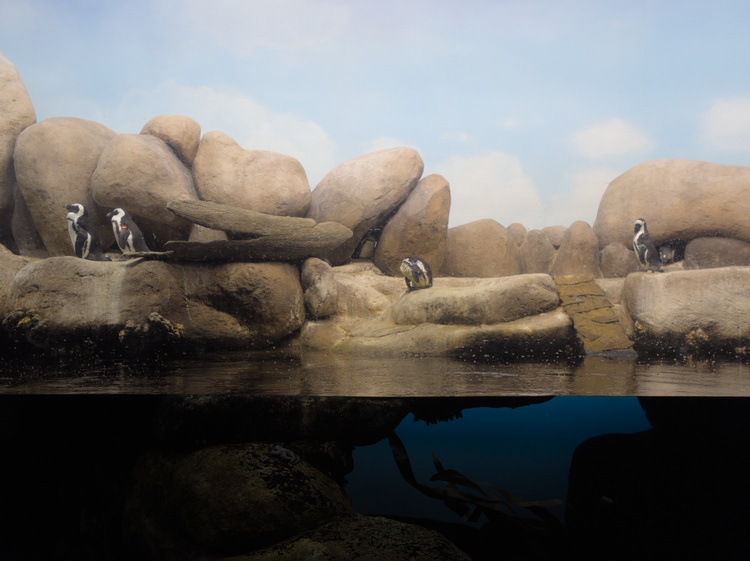 The African penguins pool.