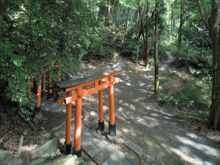 A lonely torii.