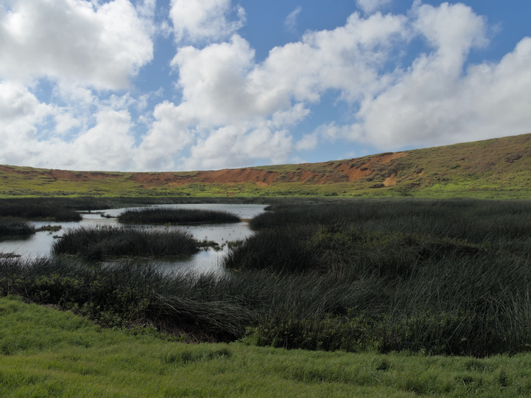 In the center of Rano Raraku's crater there is a lagoon.
